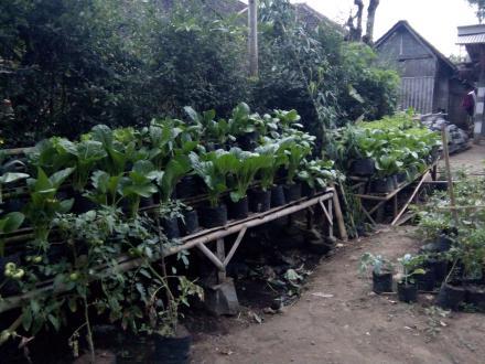 Budidaya Sayur Organik