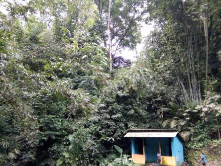 Wana Wisata Hutan Sedaeng